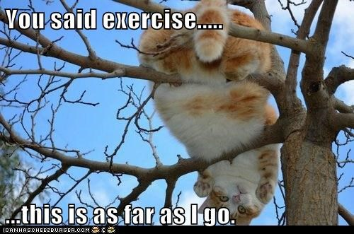trees,exercise,Cats