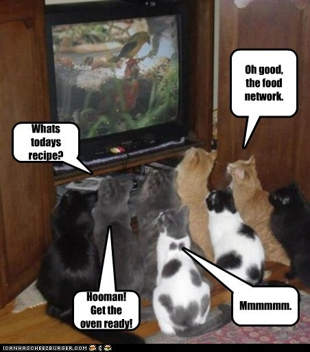 Oh good, the food network. Whats todays recipe? Mmmmmm. Hooman! Get the oven ready!