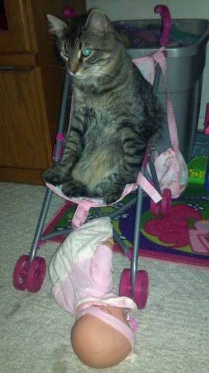 baby dolls Cats strollers - 7079749376