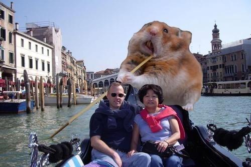 hamster,venice,boat