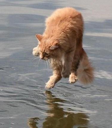 cat no - 7079844096