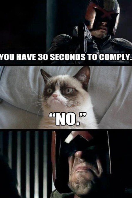 judge no Grumpy Cat - 7080109824