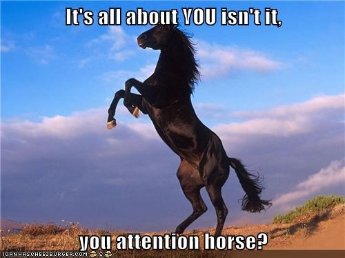 you,attention,puns,horses