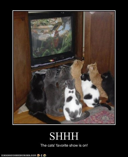 SHHH The cats' favorite show is on!