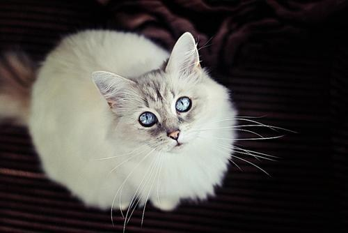 cyoot kitteh of teh day eyes Cats - 7080398080