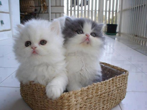 cyoot kitteh of teh day Cats basket