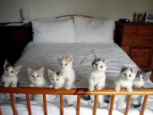 cyoot kitteh of teh day bed Cats