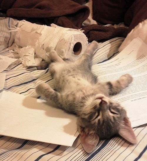 cyoot kitteh of teh day destroy sleep Cats - 7080409856