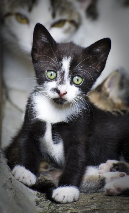 cyoot kitteh of teh day eyes Cats - 7080412928