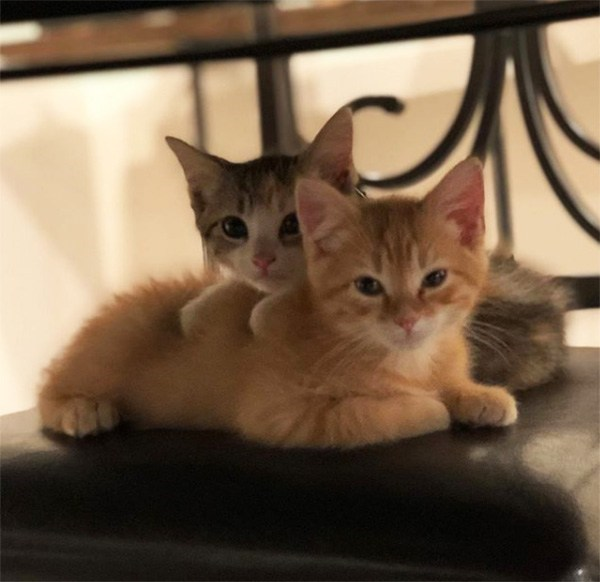 two kittens at an office