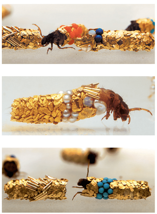 insects,art,gold