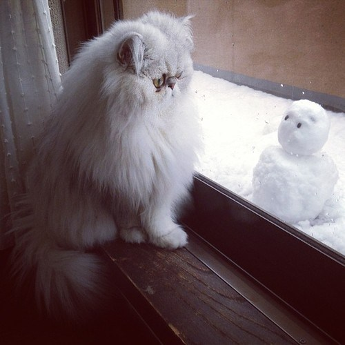 snow winter Cats snowman - 7080570624