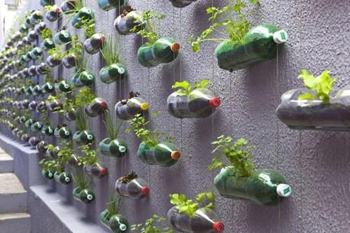 bottles design garden g rated win - 7080708864