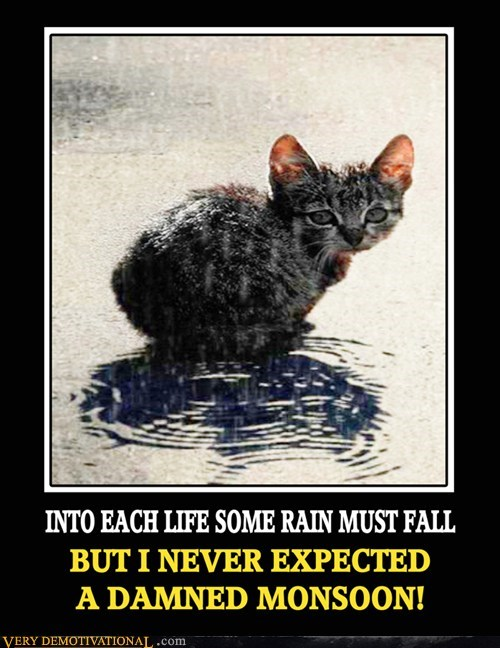 Sad cat rain - 7081028096