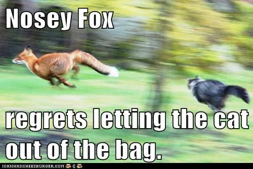 regrets foxes expression chasing Cats