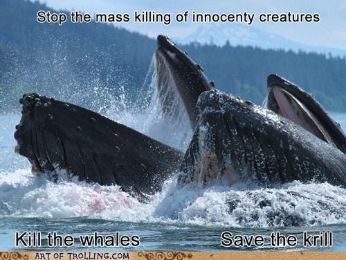 whales activism - 7081636608
