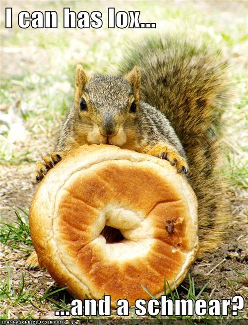 bagel squirrels lox schmear eating