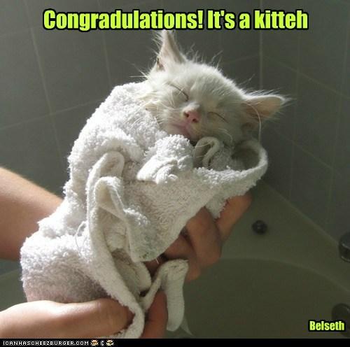 baby kitten Cats - 7081924352