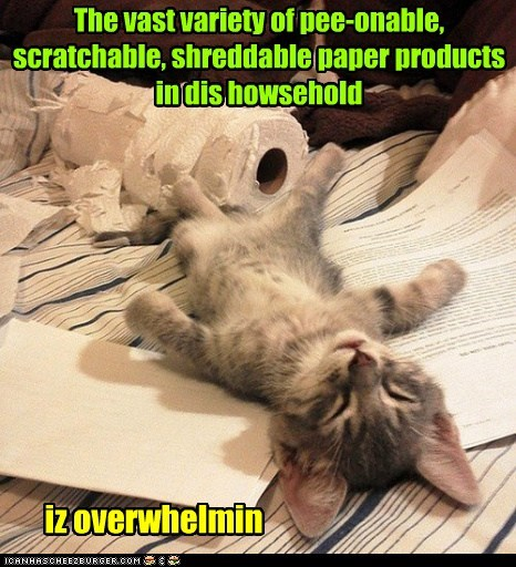 The vast variety of pee-onable, scratchable, shreddable paper products in dis howsehold iz overwhelmin