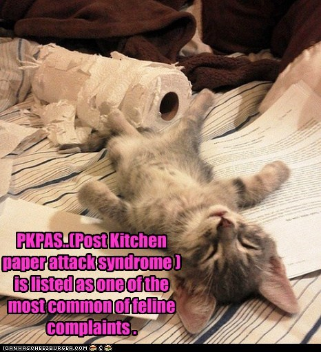 PKPAS..(Post Kitchen paper attack syndrome ) is listed as one of the most common of feline complaints .