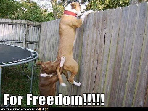 freedom,escape
