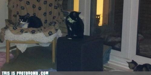 SOON,Cats