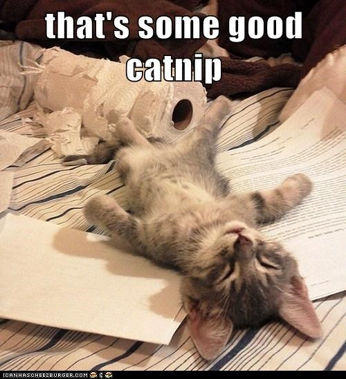 that's some good catnip