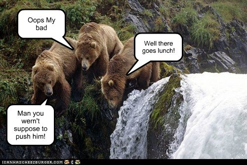 pushed bears oops lunch cliff - 7082878976
