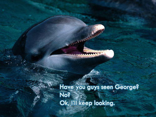 George,dolphin,oceanography,names,science