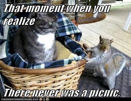 picnic,squirrel,food,Cats