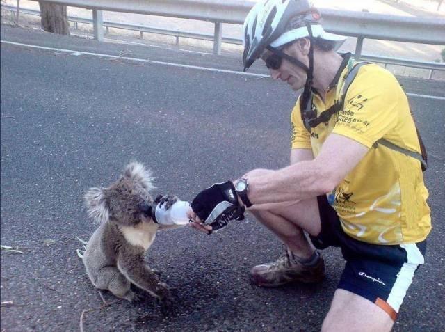 animal photos photos amazing thousand animals - 7083781