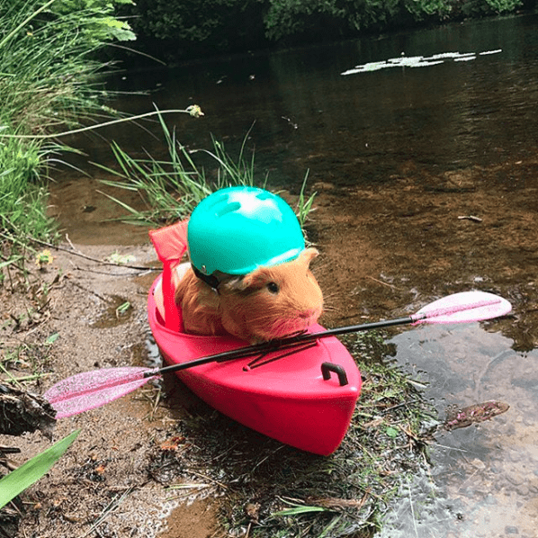 hamster in a tiny rowing boat