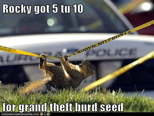stealing,bird seed,police line,squirrels