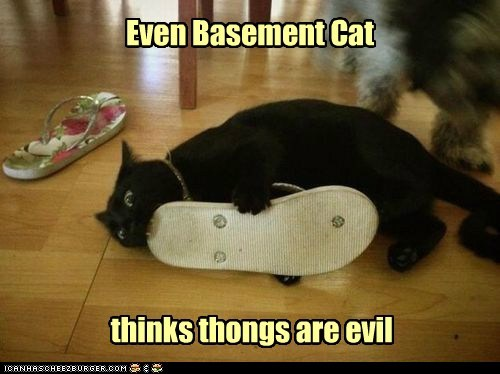 Even Basement Cat thinks thongs are evil