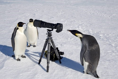 photgrapher,birds,penguins,camera