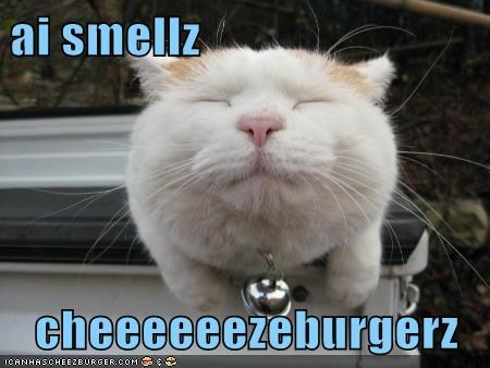 ai smellz  cheeeeeezeburgerz