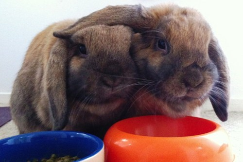 Bunday,bunnies,friendship,ears,squee,rabbits