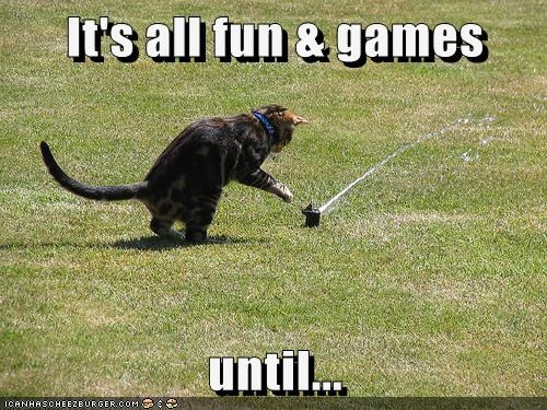 games water Cats