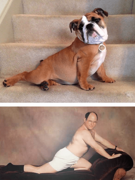 dogs,seinfeld,jason alexander,funny