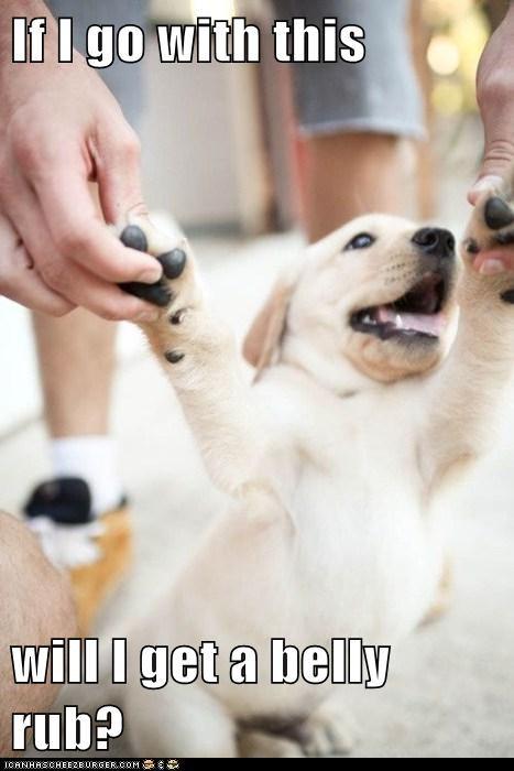 puppy belly - 7086305024