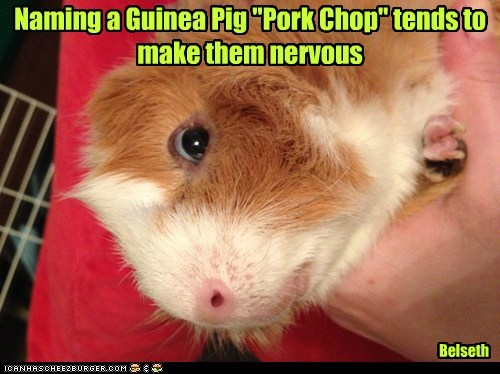 nervous,pork chops,guinea pigs,names