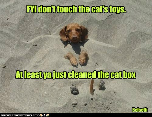 FYI don't touch the cat's toys. Belseth At least ya just cleaned the cat box