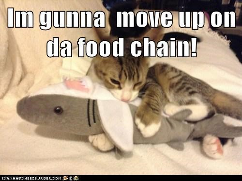 toys,sharks,food,Cats