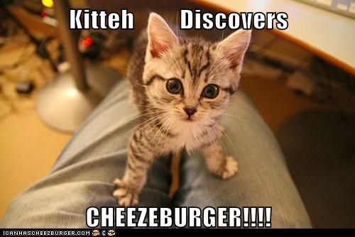 Kitteh Discovers CHEEZEBURGER!!!!