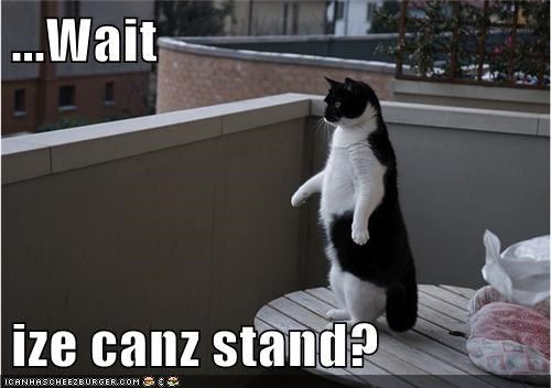 stand outside legs Cats - 7087137536