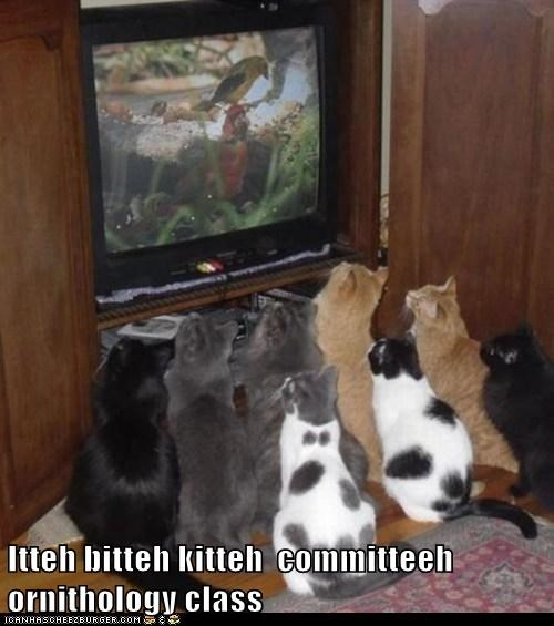 class,birds,TV,Cats