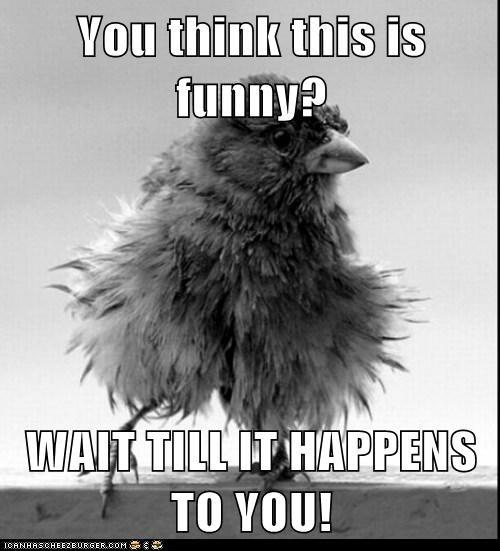 wait birds embarrassed Fluffy funny - 7087697664