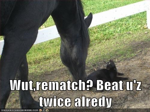 stubborn,rematch,horses,Cats