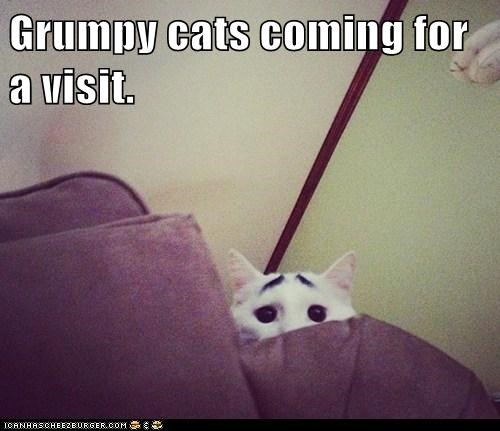 Grumpy cats coming for a visit.