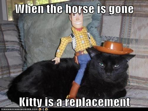 Cheezburger Image 7087904256